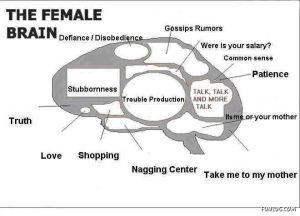 know_female_brain_Funzug.org_01